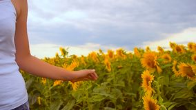 Girl irons a sunflower. stock footage