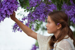 Girl and Jacaranda Tree. Pretty young girl picking some purple jacaranda flowers from a tree Stock Image