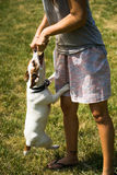 Girl with jack russel terrier Royalty Free Stock Image