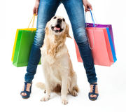 Shopping with dog Royalty Free Stock Photography