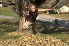 Girl Jumping into Leaf Pile. Smiling Girl Jumping into Pile of Autumn Leaves Royalty Free Stock Images