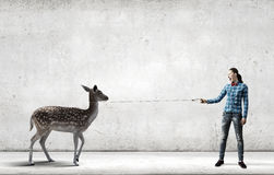 Girl with kangaroo. Young woman in casual holding deer on lead Royalty Free Stock Photo