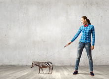 Girl with kangaroo. Young woman in casual holding zebra on lead Stock Images