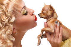 Girl kissing chihuahua. Chihuahua puppy in the hands of the blonde.Beautiful glamour woman with small dog Chihuahua in hands Royalty Free Stock Photography