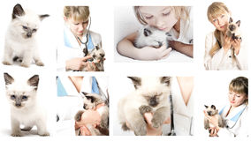 Girl and kitten Stock Photography