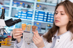 Girl in the laboratory of food quality tests legumes grain royalty free stock image