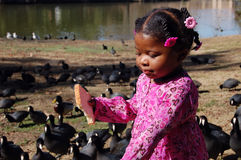 Girl at Lake 4. Little african american girl feeding the ducks at the lake Royalty Free Stock Images