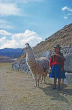 Girl with lama Royalty Free Stock Photos
