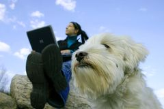 Girl with laptop. Girl with dog sit on rock in  a blue sky.  Girl having her laptop to work in nature Stock Images