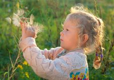 Girl with a large dandelion Royalty Free Stock Image