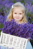 Girl  in lavender field Stock Photo