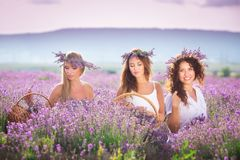 Girl on the lavender field Stock Photo