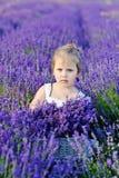 Girl  in lavender field Stock Image