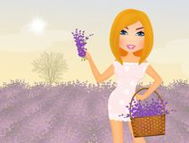 Girl with lavender Stock Photo