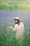 Girl in the lavender in a smile Stock Photos