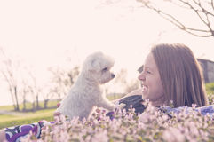 Girl laying in flowers with Maltese dog. Teenage girl smiling and amused with Maltese puppy Royalty Free Stock Images