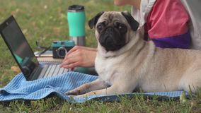 Girl laying and typing on laptop on a lawn with her pug around stock video footage