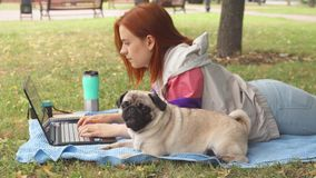 Girl laying and typing on laptop on a lawn with her pug around. Girl is laying on a carpet on lawn in a park. She typing something on her laptop. Pug laying stock video