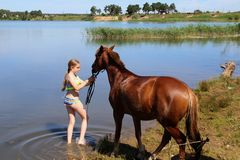 The girl lead the horse into the lake. Stock Photos
