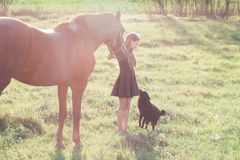 Girl leads her horse and stroking black dog. On the sunlit field Royalty Free Stock Images