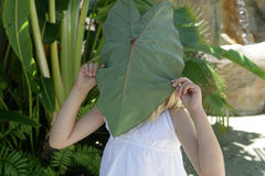 Girl with leaf over face. Young girl holding a large leaf over her face, caucasian/white Royalty Free Stock Image