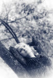 Girl lies on a branch Stock Images