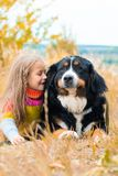 Girl is training large dog for walk through. Girl lies next to big dog on autumn walk Berner Sennenhund royalty free stock photos