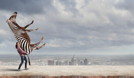 Girl lifting zebra Stock Images