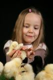 Girl and little chickens 1 Stock Photos