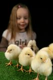 Girl and little chickens 2 Stock Images