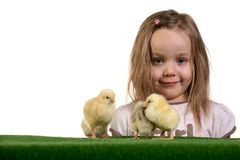 Girl and little chickens 3 Royalty Free Stock Image