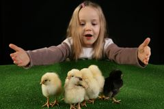 Girl and little chickens 4 Royalty Free Stock Photography