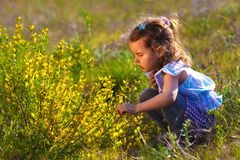 Girl little flowers yellow field child kid Stock Image