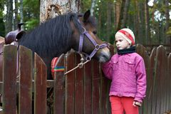 Girl and a little horse pony Royalty Free Stock Photos