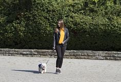 Girl and a little white dog.Park.Natural.Walking and enjoying. A relaxed walk in the park Girl and a little white dog.The nature royalty free stock image