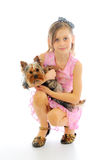 Girl with the little yorkie Royalty Free Stock Image
