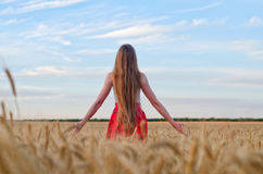Girl with long hair standing with her back to the wheat field outstretched hands Stock Images