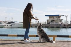 A girl with long hair treats the dog a treat. Girl with long hair treats the dog a treat on the background of the seaport stock images