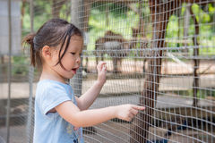 Girl looking animal in zoo Royalty Free Stock Photo