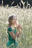 Girl on the field. Girl looking at the ear of wheat on the field royalty free stock photography