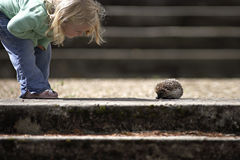 Girl (3-5) looking at hedgehog beside steps, side view, low section Stock Photo