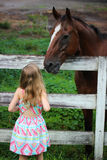 Girl Looking At Horse. Little girl looking up at a beautiful brown horse Stock Photos
