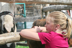 Girl looking at horses. Beautiful country girl look at the horses Royalty Free Stock Photography