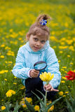 Girl is looking through a magnifying glass flower Royalty Free Stock Image