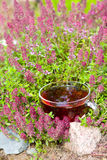 Cup of herbal tea in  thyme herbs  Royalty Free Stock Photos