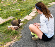 Girl looking at marmot in Rocky Mountain NP Royalty Free Stock Photo