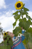 Girl looking at sunflower Stock Photography