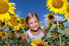 Girl looking through Sunflowers Royalty Free Stock Photography