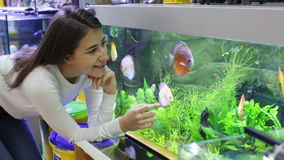 Girl looking at tropical fish in aquarium stock video