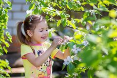 The girl looks at the blossoming quince tree branch. The girl laughs standing near the blossoming tree at the dacha Royalty Free Stock Images
